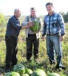 В Троицком районе поспели арбузы, выращенные корейцами