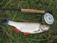 О рыбалке в период нереста