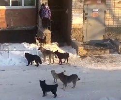В Троицке стая бездомных псов напала на детей