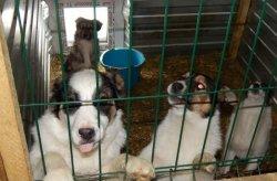 В Троицке большие проблемы с отловом собак