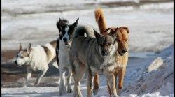 Отлов бродячих собак: о чем спорят защитники животных и людей?