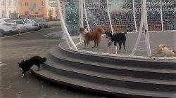 Место притяжения для… собак