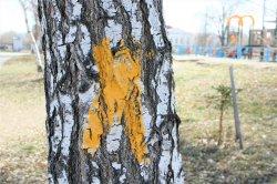 На деревьях поставили крест?
