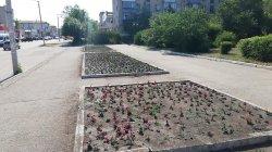 Городские цветы, засыхаете вы…