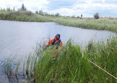 Пошел за камыши и пропал: в окрестностях Троицка утонул рыбак