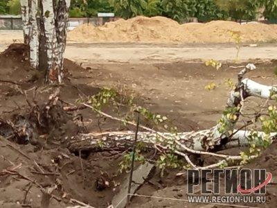 Деревья будут высажены