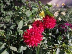 На радость всем цветы у дома