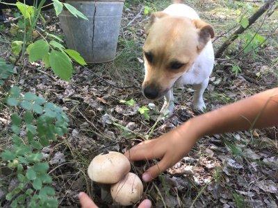 Где один гриб, там и другой!