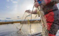Незаконно ловили рыбу