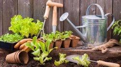 Садоводы смогут компенсировать свои расходы