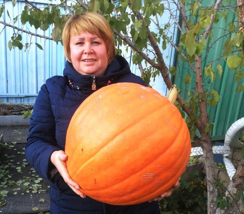 Сказочная тыква, гигантская морковь и синьор-помидор на 700 грамм