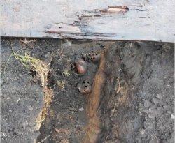 Юрий Латышев заявил о вскрытии в центре Челябинска массового захоронения 30-х годов