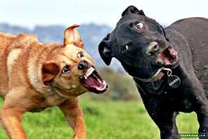 Силы по отлову бродячих собак удвоили